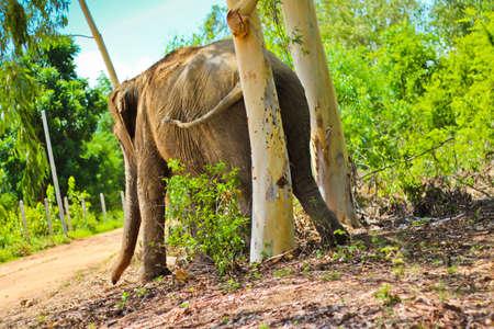 scratching: Elephant Scratching