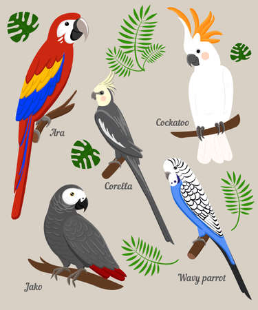 Parrots Cartoon Illustration. Parrot set Exotic birds bird of paradise Illustration