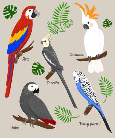 Parrots Cartoon Illustration. Parrot set Exotic birds bird of paradise Vettoriali