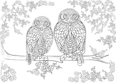 owl illustration: Hand drawn ink pattern. Coloring book for adult