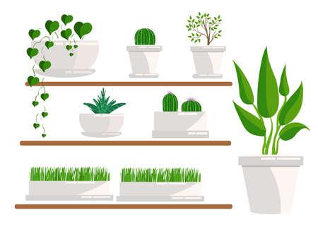 Illustration of houseplants. Cacti set, succulents, home flowers, houseplant in pot. Set of houseplant.
