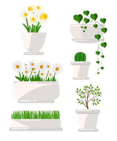 houseplant: Illustration of houseplants. Cacti set, succulents, home flowers, houseplant in pot. Set of houseplant.