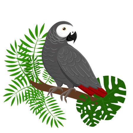 mosca caricatura: Ilustración vectorial de dibujos animados loros. Loro establecer las aves exóticas aves del paraíso