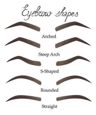Female eyebrows in different shapes. Female eyes with different forms of eyebrows Vector eyebrows realistic and cartoon style. Collection of isolated women's sketch eyebrows. Illustration