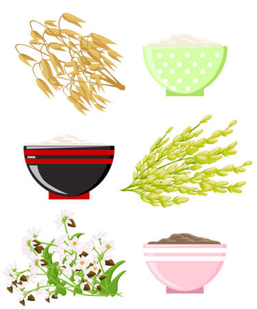 Vector illustration of ripe ears of cereals with inking. Cereals icon set with rye rice wheat corn oats millet isolated on white background.