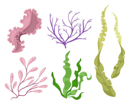 Sea plants and aquatic marine algae Seaweed set vector illustration. Yellow and brown, red and green aquarium .