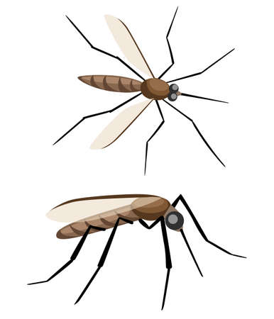Mosquitoes on white background