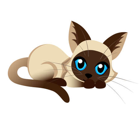 Siamese cat the Lovely kitten with blue eyes fluffy on a white background spotty a pet Cat breeds cute pet animal set vector illustration
