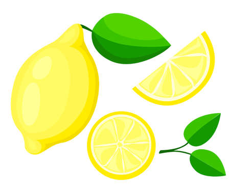Vector lemon. Fresh lemon fruits, collection of vector illustrations isolated set packaging juice design sour citrus Illustration