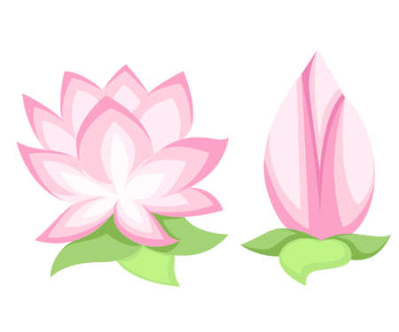 Vector illustration Beautiful pink lotus flower, isolated on white background. Stylish floral spring wallpaper. Greeting or invitation card
