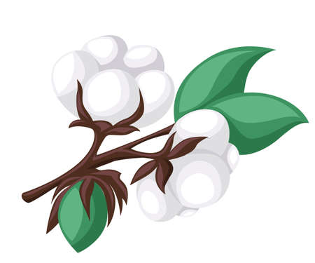 boll: Cotton isolated on the white background. Vector illustration.