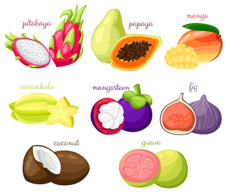 Exotic fruits vector set Juicy and ripe fruit papaya guava mango pitahaya mangosteen fig coconut carambola cartoon organic Isolated vector illustration on white background Web site page and mobile. Illustration