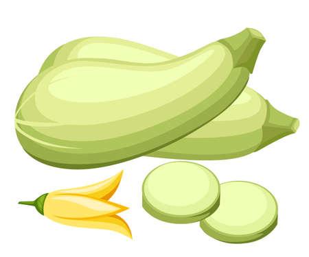 Fresh vegetable zucchini illustration.