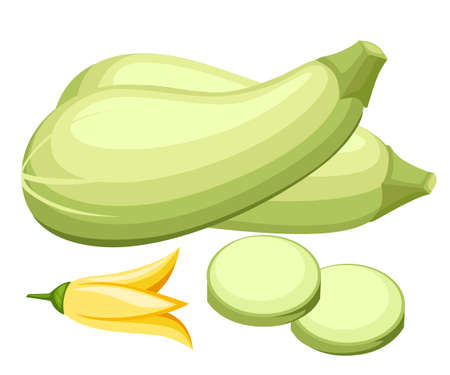 Fresh vegetable zucchini illustration.