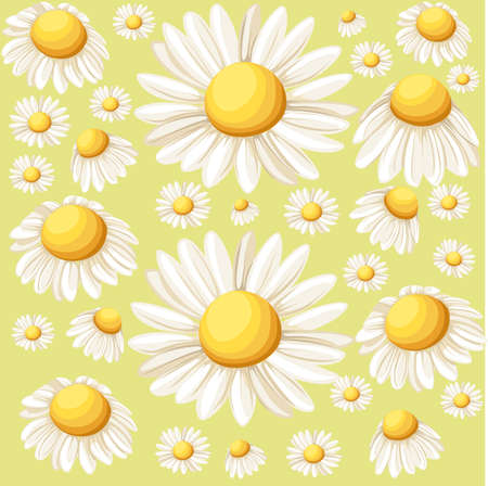 camomile tea: Bouquet realistic daisy, camomile flowers on white background. Vector illustration card camomile tea medical Web site page and mobile app design vector illustration. Illustration