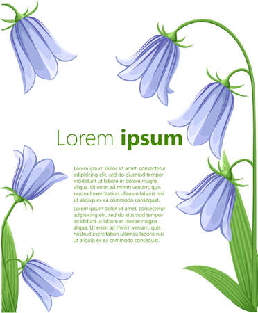 campanula: Bell-flowers Campanula Hand drawn vector illustration of blue bell flowers and buds on white background.