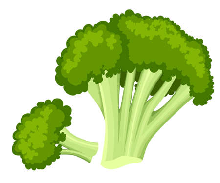 Bright vector collection of colorful broccoli. Fresh cartoon different vegetable isolated on white background used for magazine book poster card menu cover pages. Web site page and mobile app design. Illustration