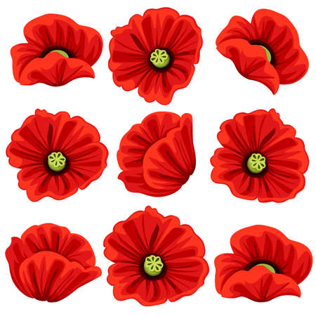 Poppy flowers icons set. Vector isolated botanical symbols of blooming red poppies blossoms. Floral bouquets or springtime flourish flowery bunches design for decor or holiday greetings template Vettoriali