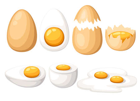 Chicken Eggs. Roasted, boiled, raw, sliced, cracked egg vector set. Isolated on white background. Website page and mobile app design Vettoriali