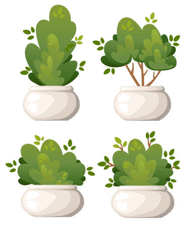 Set of natural bush and garden trees in white vase for park cottage and yard vector illustration isolated on white background website page and mobile app design. Ilustrace