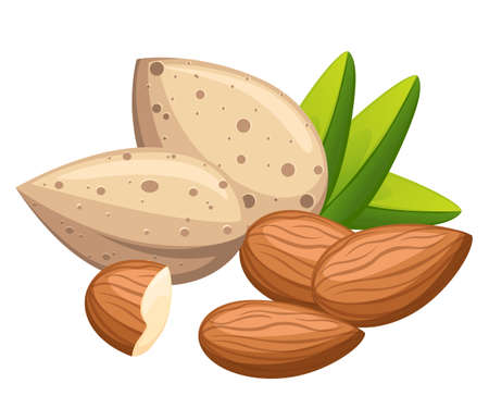Shelled and without shell almond nut with leaves vector illustration isolated on white background website page and mobile app design. Иллюстрация