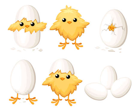 Set of funny chicken in egg for Easter decoration cartoon vector flat clip art yellow bird in an egg shell vector illustration on white background.