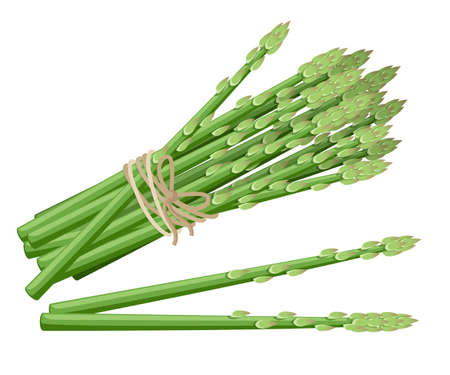 Asparagus vegetable plant Vector illustration of bunch of asparagus stems.