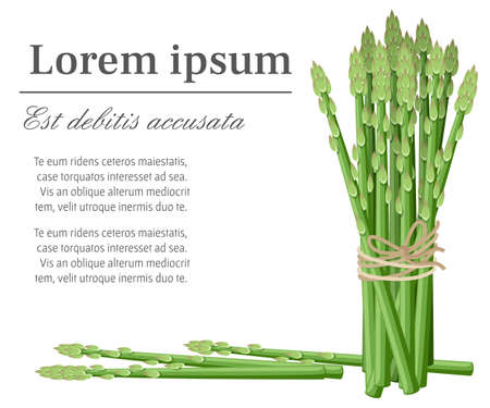 Asparagus vegetable plant, bunch of asparagus stems vector illustration with place for your text for decorative poster emblem natural product farmers market web site page and mobile app design.