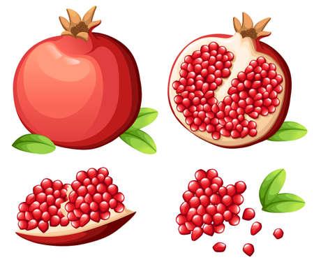 Pomegranate and fresh seeds of pomegranates Vector illustration of opened pomegranate. Stock Illustratie