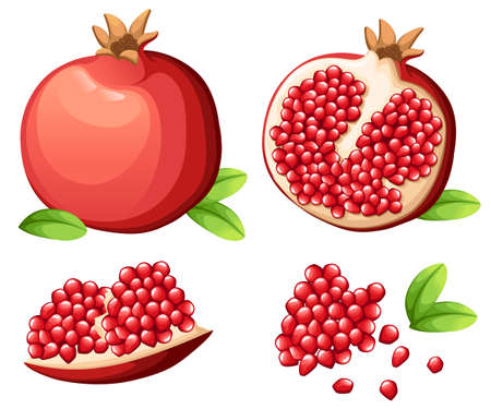 Pomegranate and fresh seeds of pomegranates Vector illustration of opened pomegranate. Illustration
