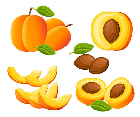 Peach and slices of peaches Vector illustration of peaches. 向量圖像