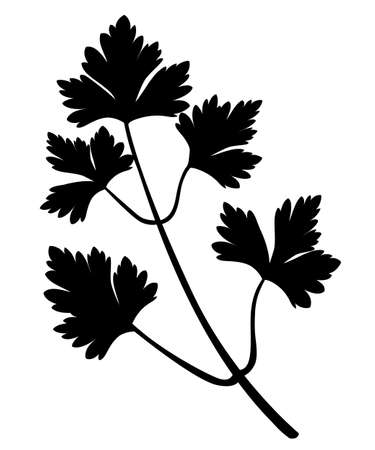 Black silhouette  parsley leaves closeup.  Vector illustration isolated on white background.