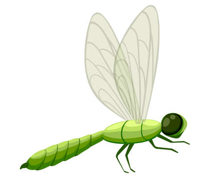 Green cartoon dragonfly illustration. Fly insect wildlife object. Flat vector illustration isolated on white background.