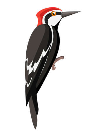 Woodpecker bird. Flat cartoon character design. Colorful bird icon. Cute woodpecker template. Vector illustration isolated on white background.