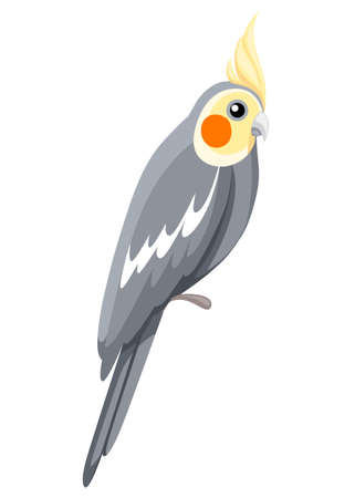 Cockatiel parrot bird. Parrot on branch posters, children books illustrating. Tropical bird cartoon style. Isolated on white background.