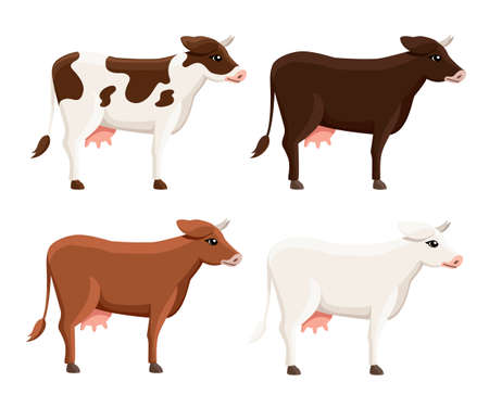 Collection of cute cows. Farm domestic animal. Flat style animal design. Vector illustration isolated on white background.