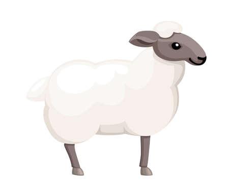 White sheep. Farm domestic animal. Flat style animal design. Vector illustration isolated on white background.