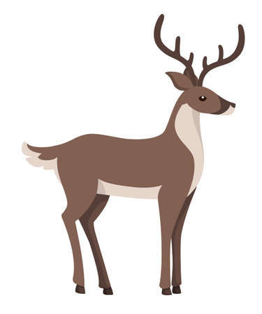 Reindeer with grey fur. Arctic animal, cartoon flat design. Vector illustration isolated on white background.