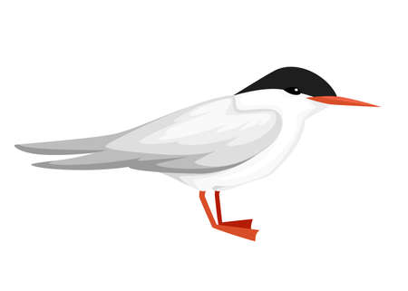Flying white bird. Arctic Tern. Sterna hirundo. Arctic animal, cartoon flat design. Vector illustration isolated on white background. Vectores