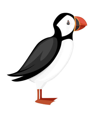 Flying white bird. Atlantic puffin. Arctic animal, cartoon flat design. Vector illustration isolated on white background.