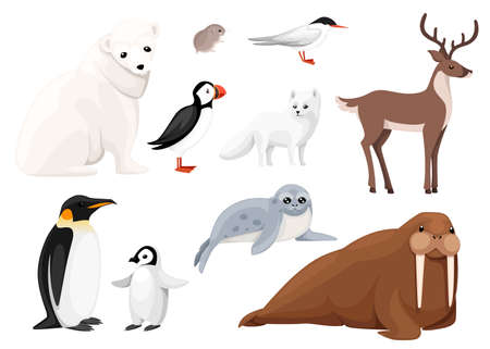 Set of arctic animals icon. Birds and mammals. Arctic animal, cartoon flat design. Vector illustration isolated on white background.