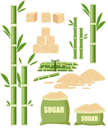 Sugar plant agricultural crops. Sugar cane with leaf. Sugar in sackcloth bags with label. Ingredient for sweet food and dessert. Flat vector illustration isolated on white background. Illusztráció