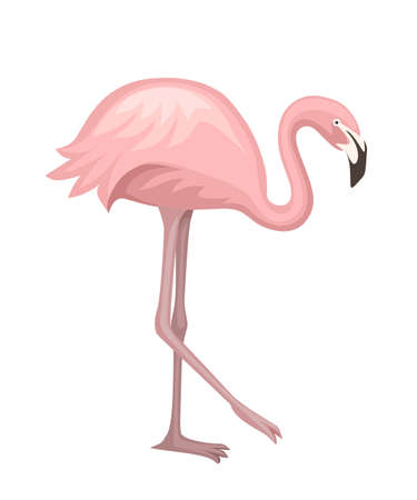 Cute animal, peach pink flamingo. Cartoon animal character design. Flat vector illustration isolated on white background. Flamingo standing on one leg.