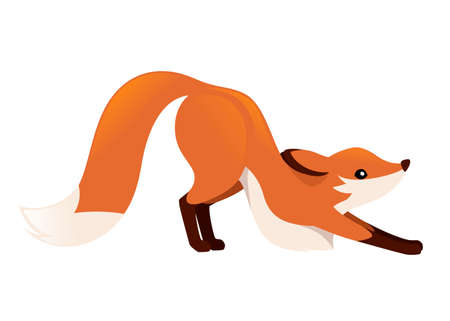 Cute red fox is stretching on four legs. Cartoon animal character design. Forest animal. Flat vector illustration isolated on white background.