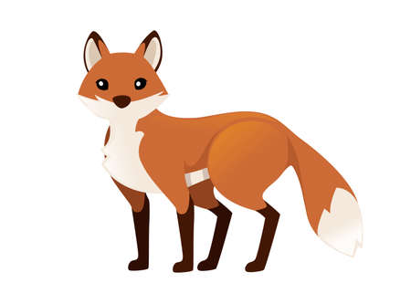 Cute red fox is standing on four legs. Cartoon animal character design. Forest animal. Flat vector illustration isolated on white background.