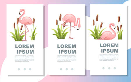 Pink flamingo standing in water. Lake with green reeds. Birds stay in lake. Flat vector illustration on white background. Advertising flyer or greetings card design