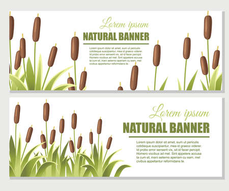 Reeds in green grass. Reed plant. Green swamp cane grass. Flat vector illustration on white background. Clip art for decorate swamp. Advertising flyer or greetings card design.