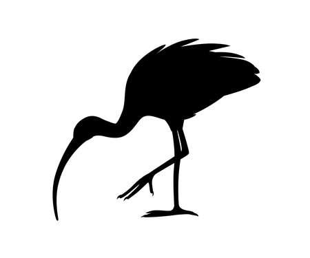 Black silhouette American white ibis Ilustração