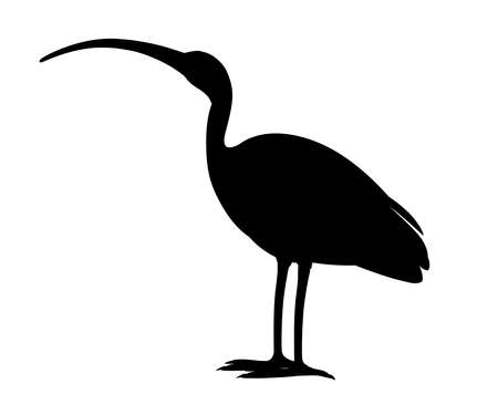 Black silhouette American white ibis Illustration