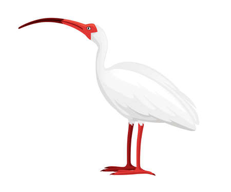 American white ibis flat cartoon animal design white bird with red beak on white